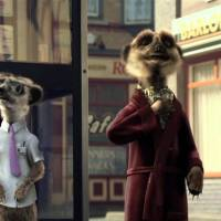 Gay Meerkats: The Story So Far
